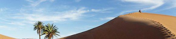 cropped-desert_dune_palm-trees.jpg